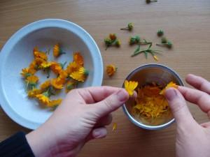 Ringelblumen zupfen